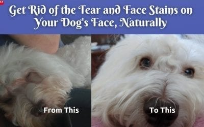 The #1 Best Way To Remove Tear Stains On Dogs Face Naturally – Home Remedy