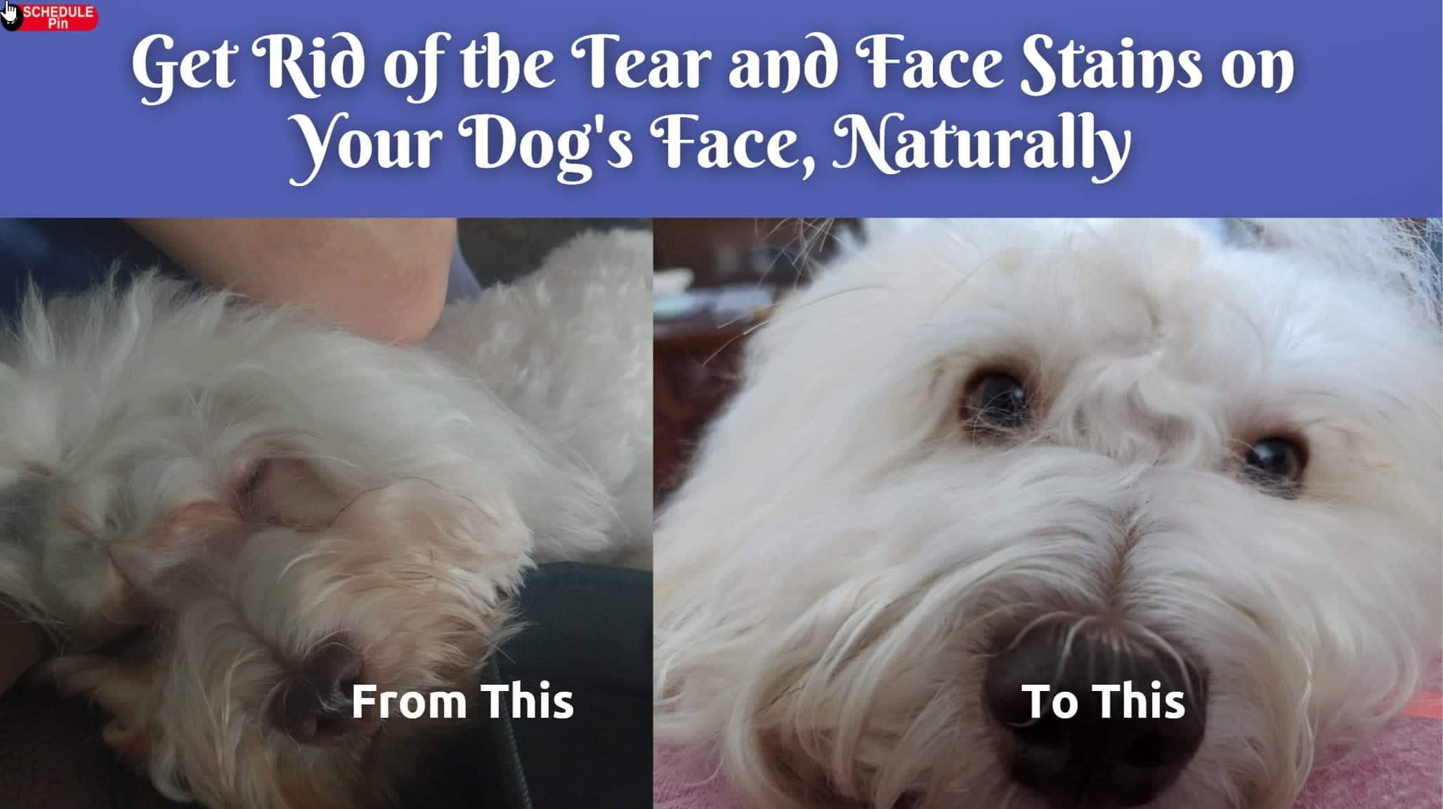 Tear Stains on Dogs Face - Get Rid of Red Stains On White Dogs Face - Dr.DarHawks 2020-11-22_11-12-29