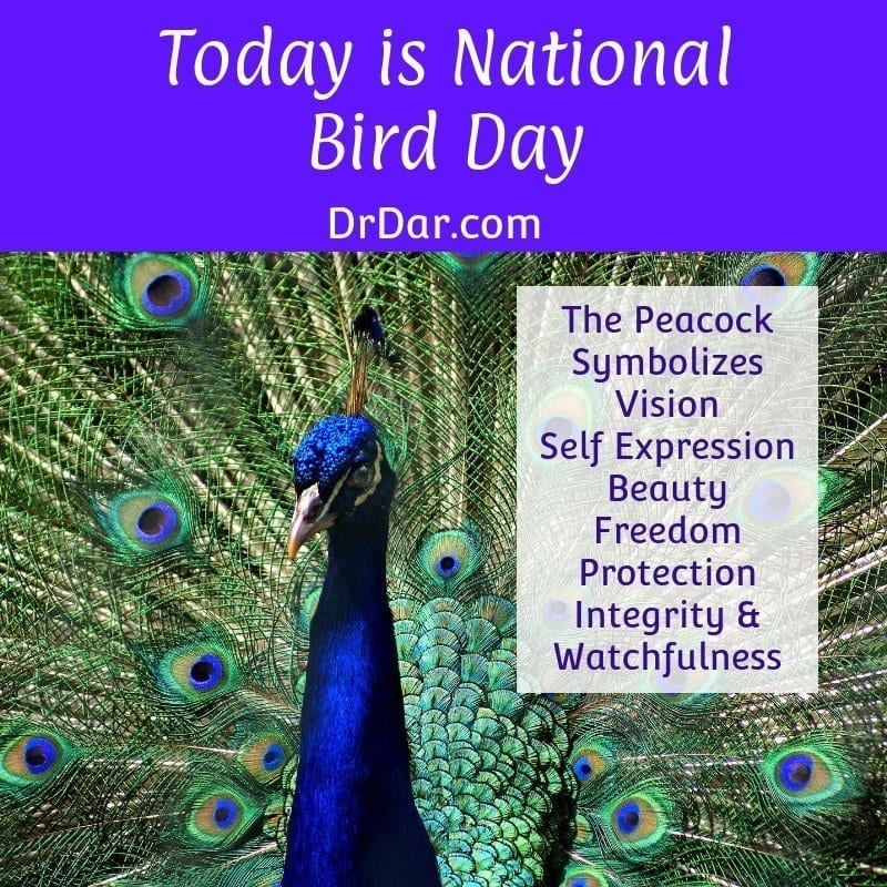 Today Is Nationalbird Day Peacock