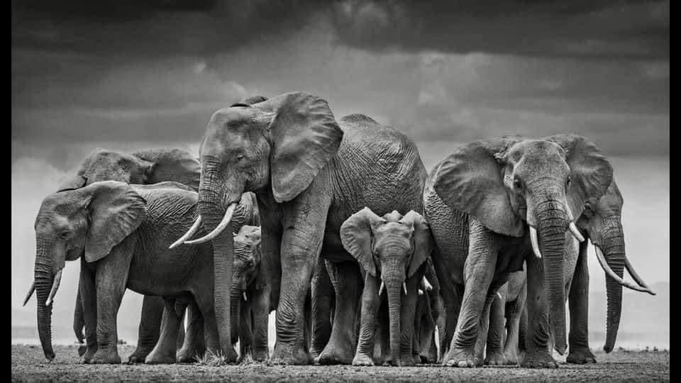 5 Ways to Support Healthy People Pleasers, Givers, and Helpers – Lessons from Nature's Elephant Wisdom
